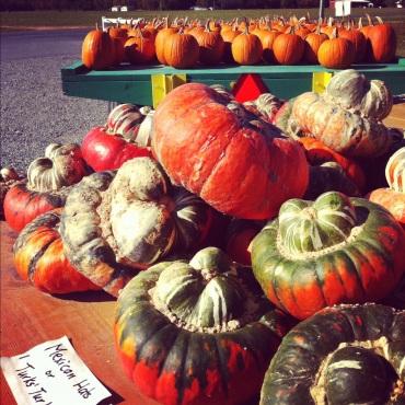 Pumpkins and Squash at Little Wagon Produce