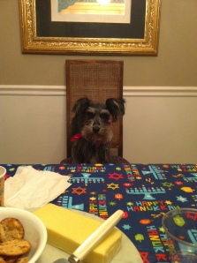 Tilly the miniature schnauzer on chanukah